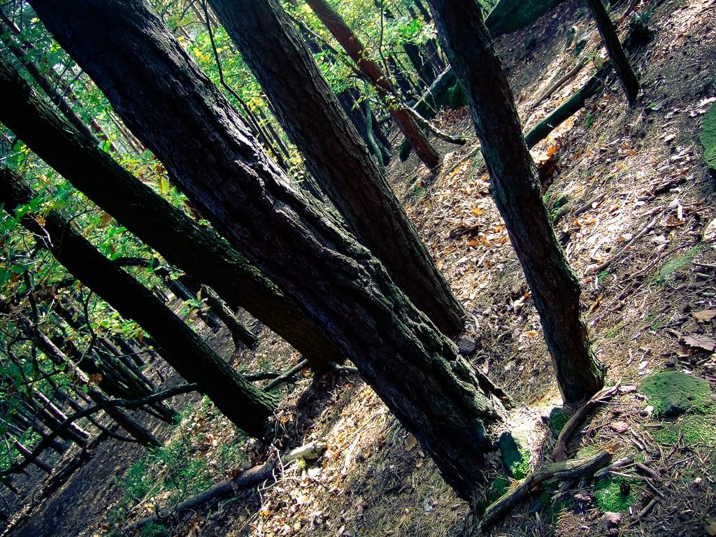 Wie man in den Wald hineinruft