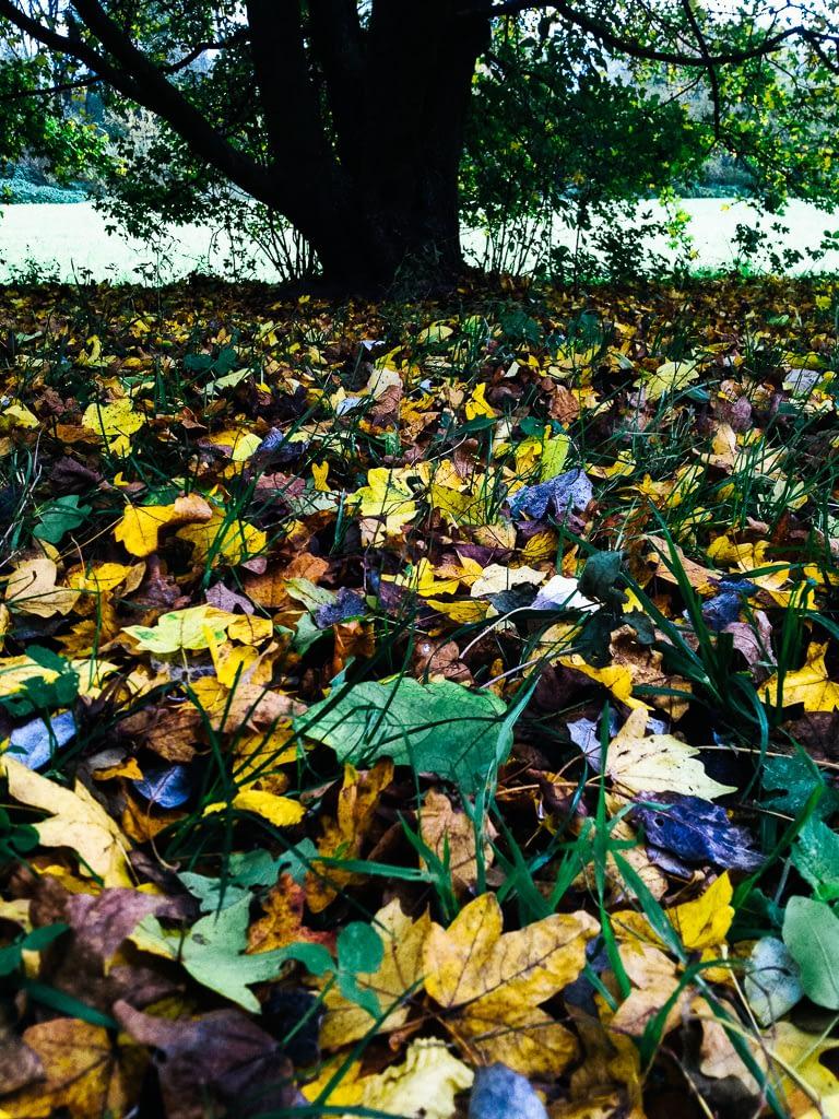 Beide haben recht: Bunte Herbstblätter